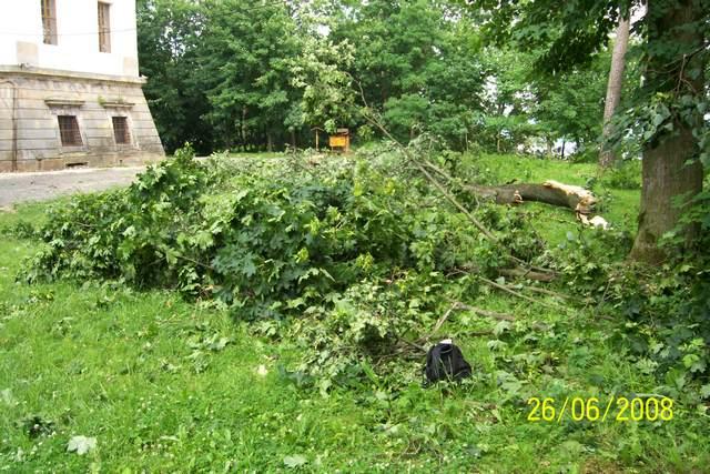 padle-stromy-pred-vezi.JPG