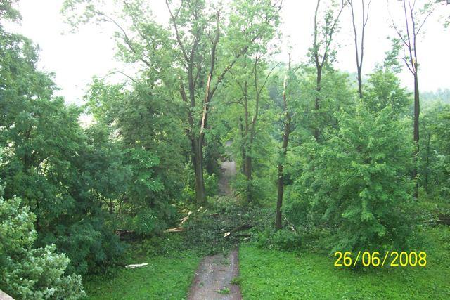 stromy-pres-cestu-a-olamane.JPG