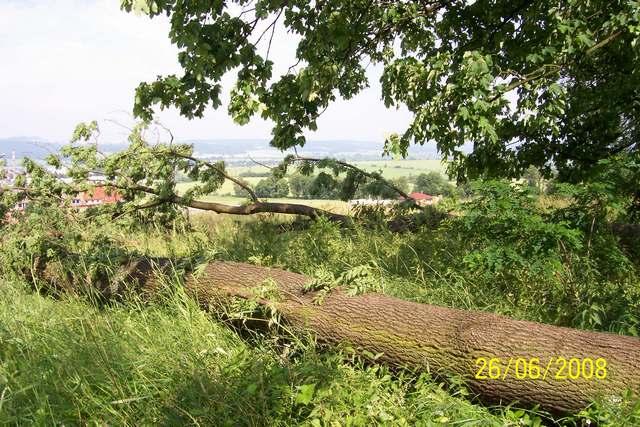 velky-strom.JPG