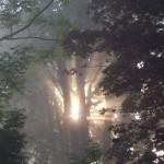 slunce-ve-strome-1-misto-v-soutezi-rudoltickych-fotografu-v-1-kole