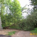 7-vyvraceny-strom-za-vezi