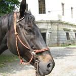 kůň u věže