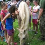 3-koně se dětem líbí